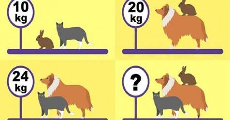 Kolik váží všechna zvířata dohromady?