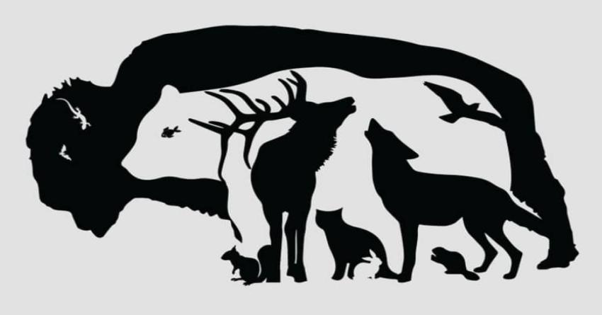 Kolik zvířat najdete na obrázku?